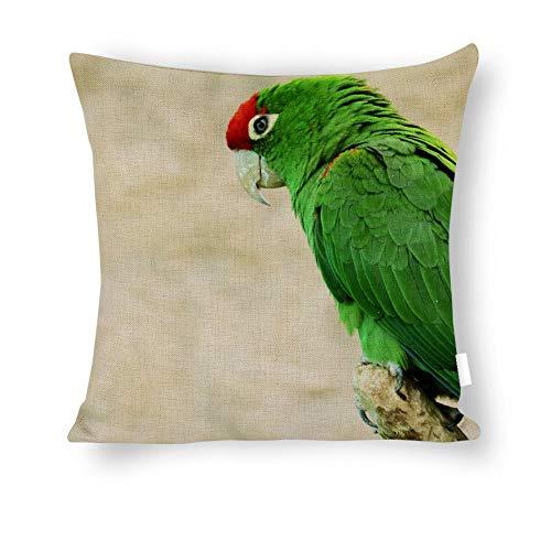 Dartys Pillow Cover Parrot-ave-Animals-Macaw-Exotic-Bird-Zoo-colorBaumwolle und Leinen Pillowcase Klassische Mode Streifen Bunte 18x18zoll 45x45cm liebevollen Kissen Decken -