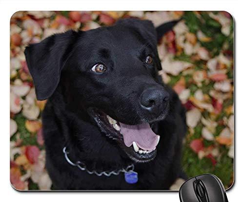 Gaming-Mauspads, Mauspad, Black Dog Brown mustert Tiernatur im Freien (Kostüm Brown Dog)