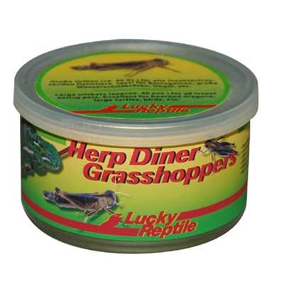 Lucky Reptile Herp Diner Grasshoppers