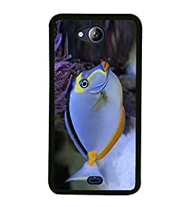PrintVisa Cute Fish High Gloss Designer Back Case Cover for Micromax Canvas Play Q355