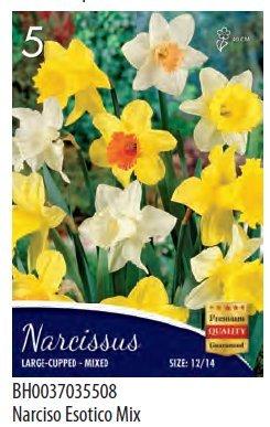 Bulbi da fiore di narcisi in confezione da 5 bulbi (esotici mix)