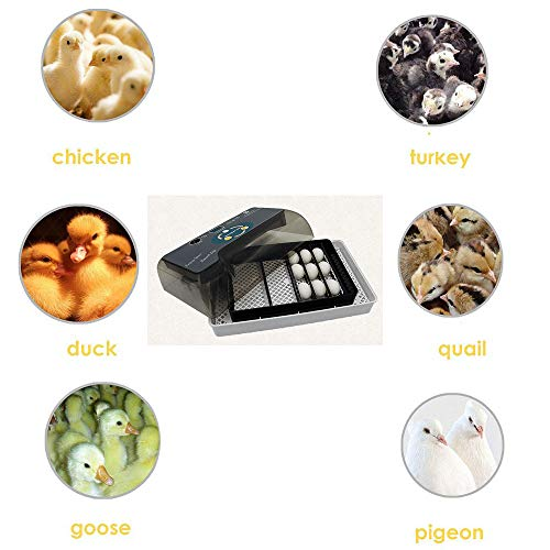 CHENGL Digitaler Eierinkubator 12 Kleine automatische Inkubatoren Huhn, Ente, Gans, Vogel, Haushaltsinkubator