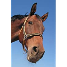 "Horse Notebook: 150 lined pages, softcover, 6""x 9"""