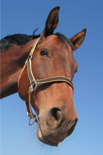Horse Notebook: 150 lined pages, softcover, 6