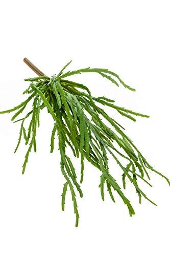 artplants Set 6 x Künstlicher Rhipsalis Hadrian auf Steckstab, grün, 35 cm - Deko Kakteen Gewächs/Kunst Sukkulenten