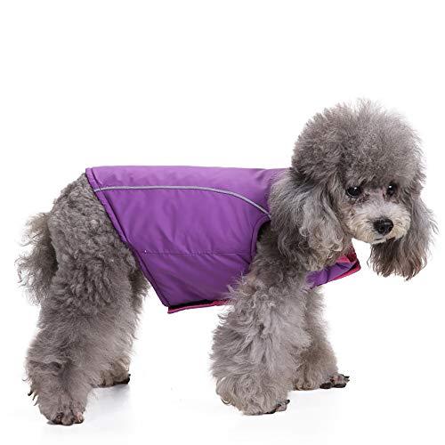 (Fenverk Hund Regenmantel Wasserdicht Haustier Jacke Hunde Winter Warm RegenmäNtel Kleider Schutz Draussen Bekleidung Kleidung Klein Mittel Groß Katze HüNdchen KostüM Mantel(Lila,L))