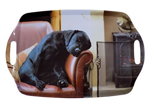 dormant Labrador chiot noir marron grand mélamine transport TRAY 48 x 31cm