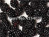 SANHOC Le Piante di gelso Bonsai Dolce Black Berry giganti Miracolo Frutta pianta Tohum Rare Albero Bonsai Garden Bush Giardino Domestico di DIY 100 Pz: 18