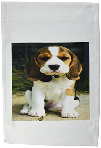 3DROSE FL _ 49290_ 1cute Beagle Puppy Posing Garden Flag, 12da 45,7cm