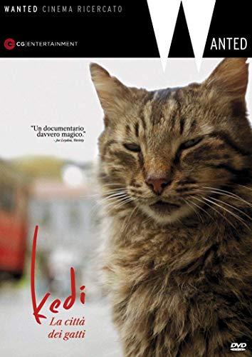 Kedi La Città Dei Gatti