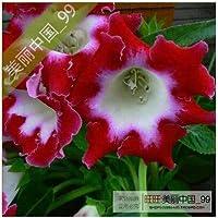 IDEA HIGH Planta de gloxinia flor de semillas-colorido gloxinia 100 pcs: 12