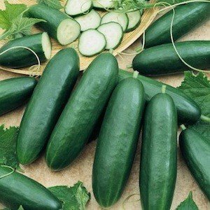 cucumber-la-diva-f1-30-finest-seeds