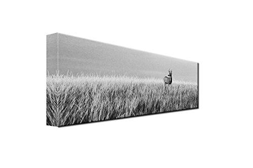 DEINEBILDER24 - Wandbild XXL Reh / Hirsch auf Wiese, Blick in die Ferne, schwarz- weiß Panorama 40 x 120 cm auf Leinwand und Keilrahmen. Beste Qualität, handgefertigt in Deutschland!