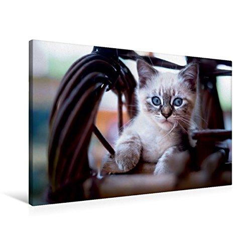 Premium Textil-Leinwand 90 cm x 60 cm quer, Lieblingsplatz | Wandbild, Bild auf Keilrahmen, Fertigbild auf echter Leinwand, Leinwanddruck (CALVENDO Tiere)