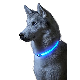 seguridad perros