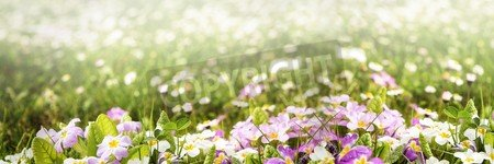 """Poster-Bild 150 x 50 cm: """"colorful flower panorama with lot of copyspace"""", Bild auf Poster"""
