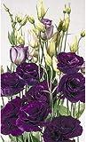 Pinkdose 5pcs / lot à fleurs doubles fleurs coupées Lisianthus ABC F1 balcon cour fleur en pot jardin Livraison gratuite: 1
