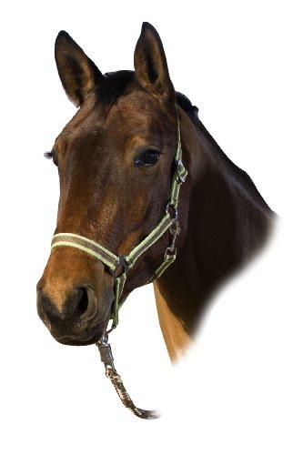 USG Halfter, braun/orange/hellgrün, Pony