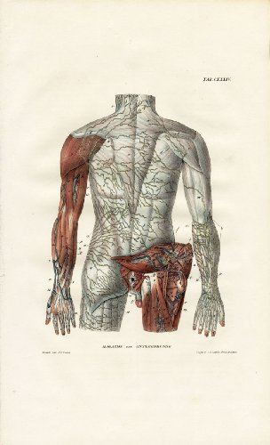 anatomia-de-linfatica-theprintscollector-antiguo-sistema-back-sinopec-brazo-bell-1839