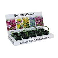 Butterfly Attracting Garden Flowers Grow Your Own Kit 100% Recyclable 5 Varieties from Seed Eco Gift Made with 100% Recyclable Materials