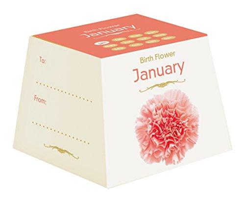 gift-republic-january-birth-flowers