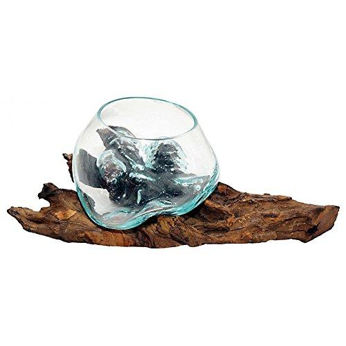 Liqva, Glas Vase auf Kaffeebaum Wurzel - Vase in Wurzel - Glasvase im Wurzelbett Deko-Glas Dekoglas