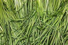 7.78g BIOLOGICO aglio erba cipollina Seeds ~ 1750ct di verdure asiatica ~ Buchukimchi coreana