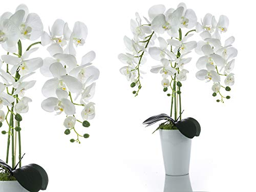 Orchideen-Arrangement Dekorativ