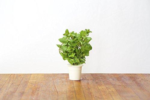 Click & Grow Smart Herb Garden Pack de 3 Recharge pour jardinière Menthe 21 x 8 x 6 cm