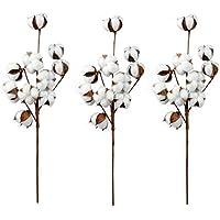Amazones Flores Secas Decoraciones Florales Arreglos - Plantas-secas-decoracion