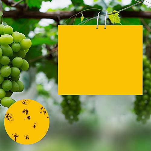 ulikey 30 pezzi trappole appiccicose, biadesivo trappole per insetti, trappole appiccicose per parassiti delle piante, atossico giallo double(20 x 25 cm)