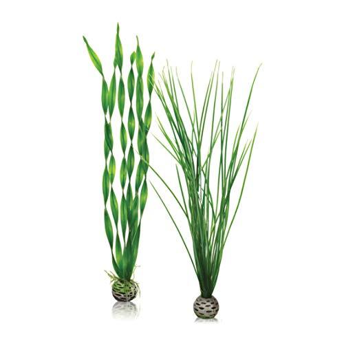 OASE biOrb Pflanzen Set groß, grün