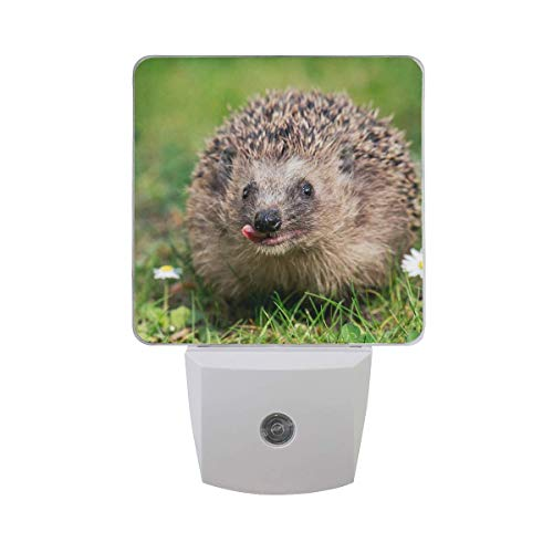 DFISKK Nachtlicht Set of 2 Funny Cute West European Hedgehog Animal On Green Grass Meadow with White Daisy Flower Auto Sensor LED Dusk to Dawn Night Light Plug in Indoor for Adults -