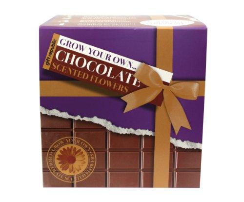 Gift Republic - Grow your own... Chocolate scented flowers, Kit per la coltivazione di fiori al profumo di cioccolato
