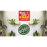 RARE PRODUCTS OOTY Hand Made Bamboo Hanging Planter