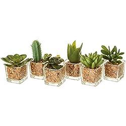 Dcasa - Pack 6 Cactus Artificial plástico en Maceta de Cristal