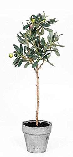Artificielles Künstliche–künstlicher Olivenbaum im Topf H 52cm mit seinen Oliven Wunderschöne Realisme