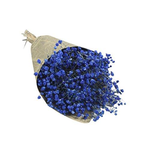Coloré(TM) Souffle de fleurs séchées Natural Gypsophila Baby Home Fleur séchée Sky Star Star. Décor Floral le Bouquet de Fleurs Fête de Mariage (Chaud rose) (Bleu B)