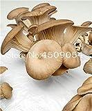 Potseed . 200 Pezzi Delicious Champignon Verde Verdura Organico Sano vegetali commestibili delle Piante in Giardino e Interna: 13