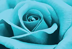 Stunning Turquoise Rose Canvas framed Art Print A1