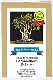 Bonsai - Ficus religiosa - Buddha-Baum - Bohdi-Baum (20 Samen)