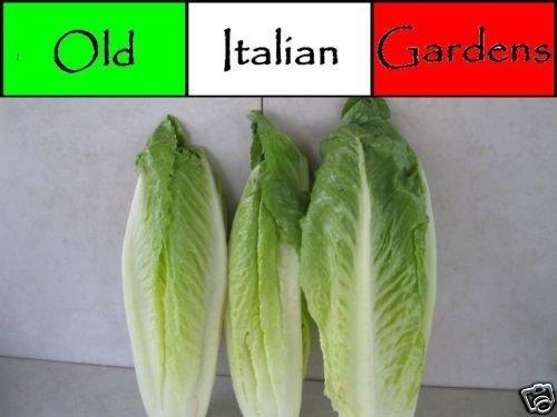 AGROBITS 500 Parris Island Romaine Erbstück Salatsamen Nicht ohne Gentechnik Nicht Hybrid Great Taste -