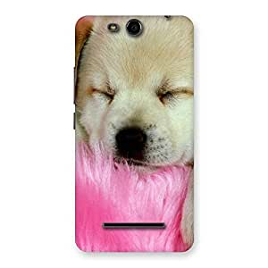 Sleeping Puppy Back Case Cover for Micromax Canvas Juice 3 Q392