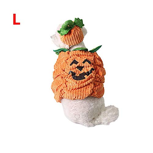 Kostüm Katze Orange - Eillybird Halloween Party Transformation Kleidung Karneval Heimtierbedarf Warme Halloween Kürbis Dreidimensionales Kostüm Orange, Grün Für Haustiere: Katzen, kleine, mittlere und große Hunde