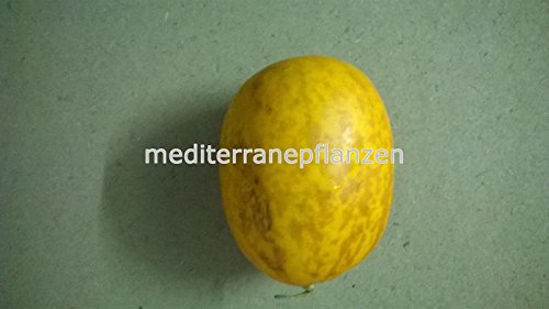 little yellow melon, extra sweet, high yield, 90 days, 20 graines