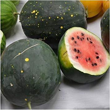 PlenTree Pflanzensamen, Mond und Sterne, Wassermelone Van Doren (Citrullus Lanatus), 20 Stück