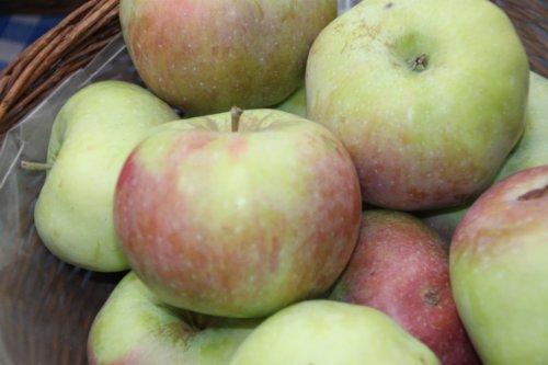 Apfel Ontario Busch wurzelnackt, 60 cm Stammhöhe inkl. Pflanzschnitt