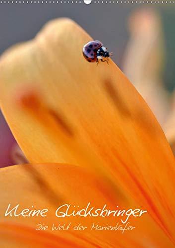 Kleine Glücksbringer - Makroansichten aus der Welt der Marienkäfer (Wandkalender 2020 DIN A2 hoch): Diese Bilder nehmen Sie mit in die Welt der ... (Monatskalender, 14 Seiten ) (CALVENDO Tiere) -