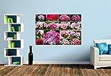 Premium Foto-Tapete Pelargonien Collage (verschiedene Größen) (Size S | 186 x 124 cm) Design-Tapete, Vlies-Tapete, Wand-Tapete, Wand-Dekoration, Photo-Tapete, Markenqualität von ERFURT