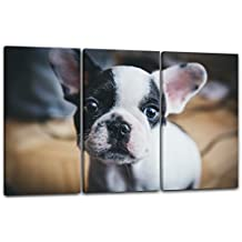 Bulldog inglese francese in bianco e nero immagini bambino dolce cane, 120 x 80 cm (3 x 40x80cm) (diverse dimensioni disponibili), Stampa su tela incorniciata su telaio in legno genuino e pronto per appendere, stampa di alta qualità prodotto in Germania.